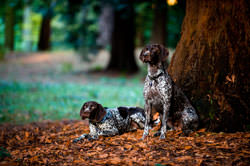 Mobile Pet Photographer London