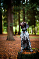 Location Pet Photography London